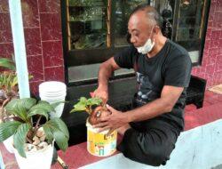 Keunikan Bonsai Kelapa Karya Warga Desa Kemiri Barat
